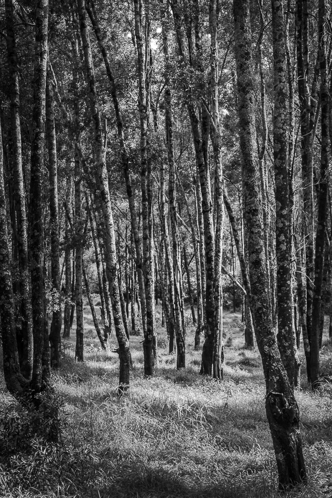 When To Use Black And White The Woods For The Trees Gideon Abate
